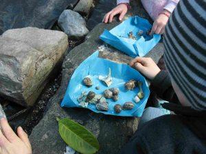 snails 03